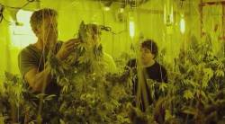 Kid Cannabis HD (movie)