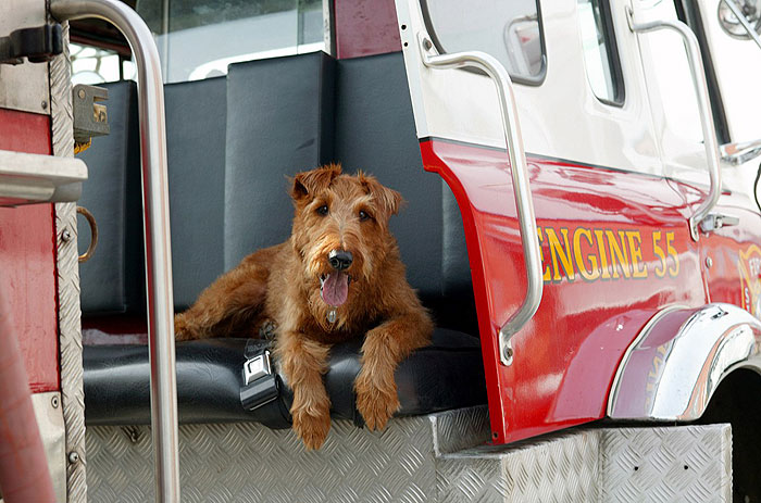Hafan hasičem SD (movie) / Firehouse Dog (2007)